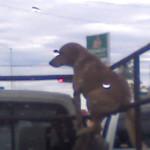 Comodidad canina