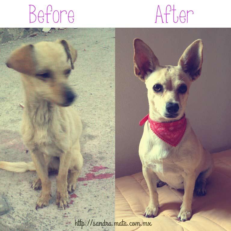 Tripi antes y después